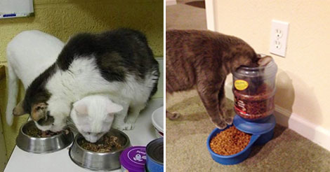 20+ Hilarious Examples Of Cat Logic. I laughed out loud with each picture…