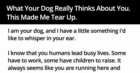 What Your Dog Really Thinks About You. This Made Me Tear Up.