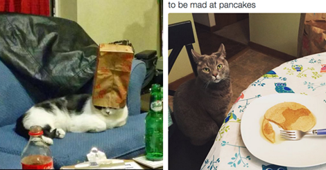 17 Times Cats Made No Sense